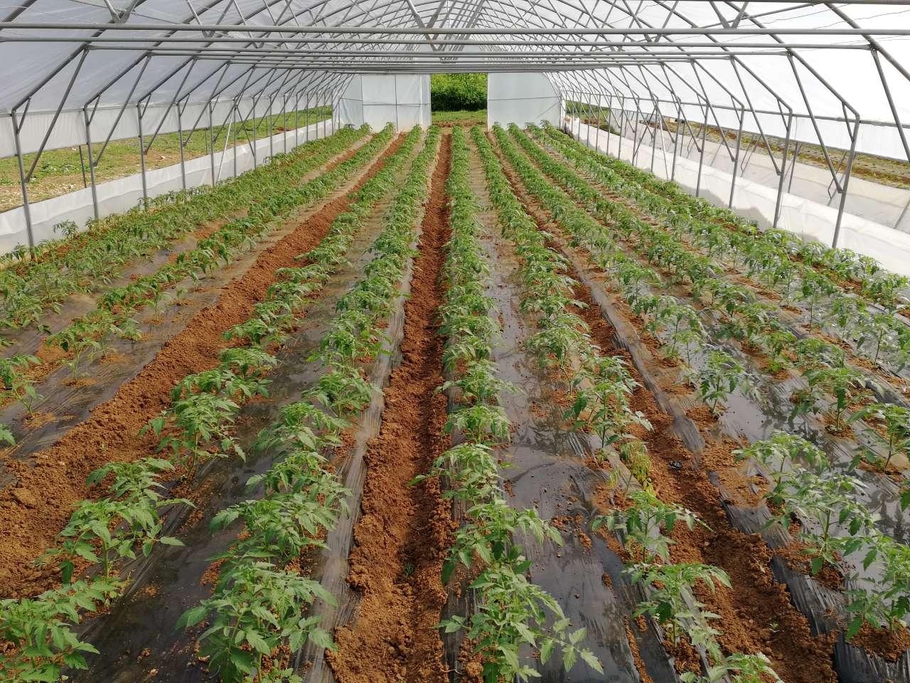 Poljoprivredno-edukacioni poligon , Park šume ''Mojmilo''