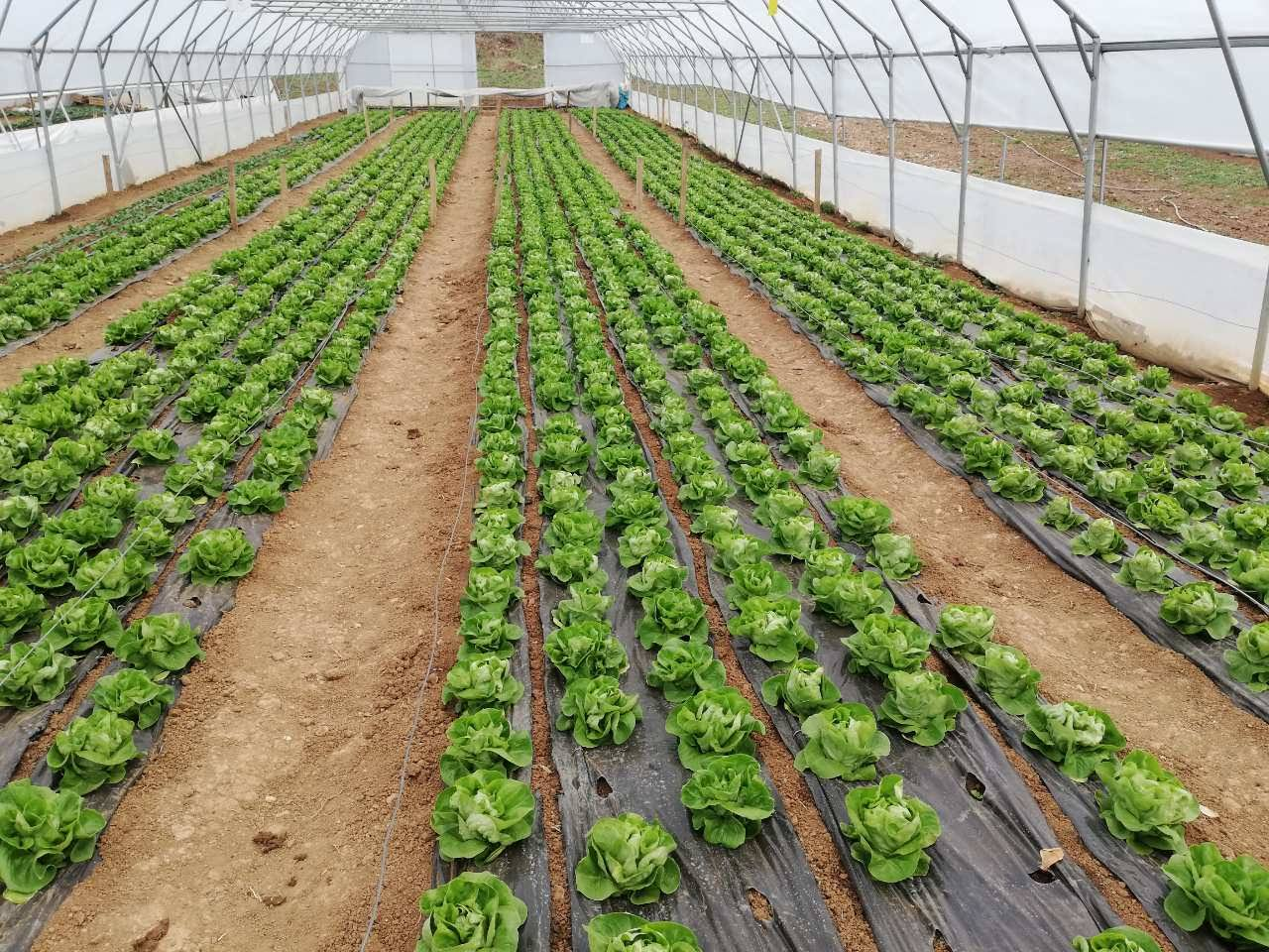 Poljoprivredno-edukativni poligon ''Mojmilo'' u svojoj ponudi nudi organske proizvode!