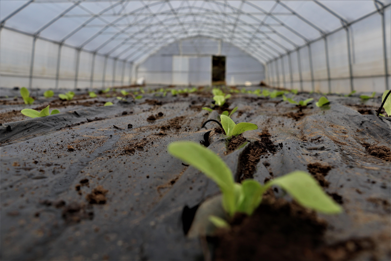 Na poljoprivrednom poligonu na Mojmilu u toku sjetva luka, salate, špinata i blitve